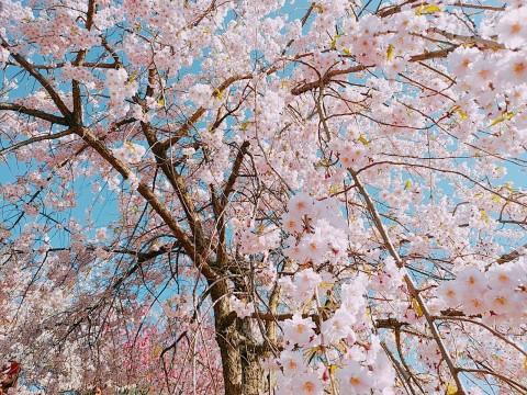 Photo_19-04-23-11-11-16.574