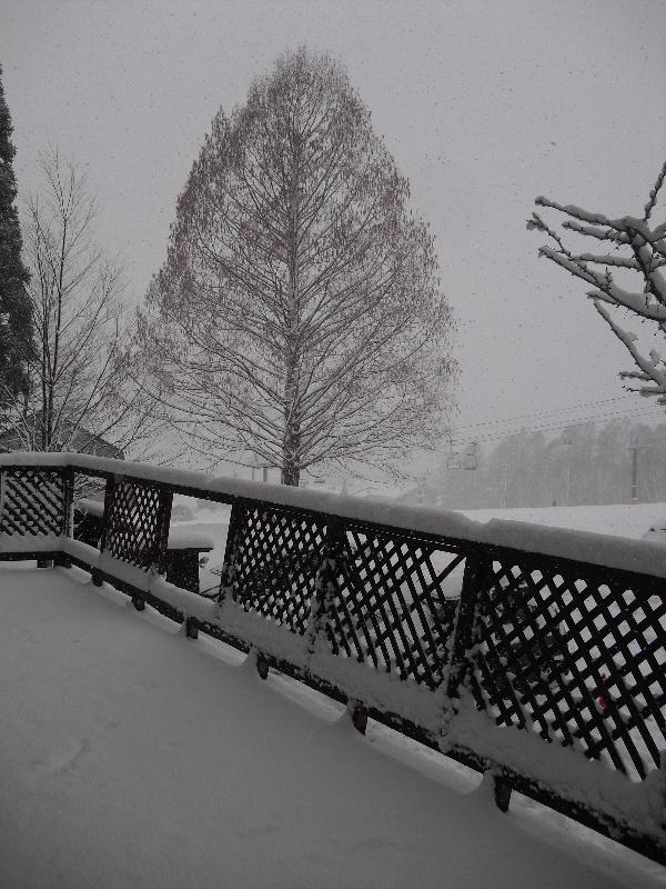 栂池はホテルの前でも雪が積もっていますよ!